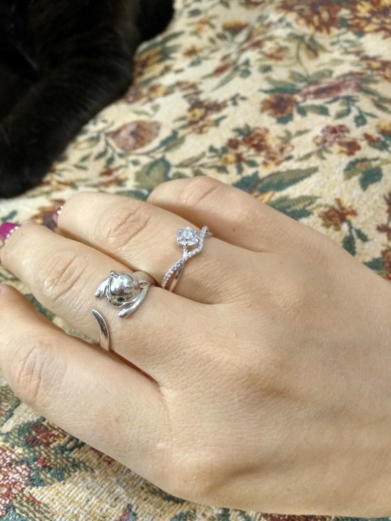 Милый серебряный котик
